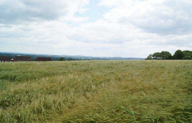 View from the site looking South West